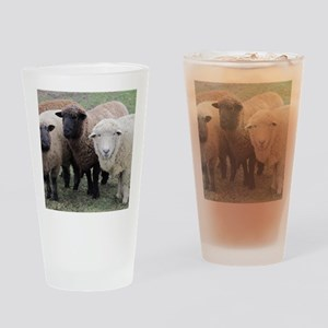 3 Sheep at Wachusett Drinking Glass