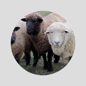 """3 Sheep at Wachusett 3.5"""" Button"""