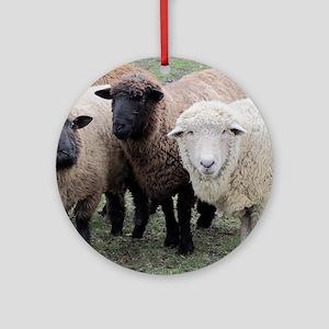 3 Sheep at Wachusett Round Ornament