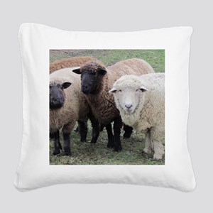 3 Sheep at Wachusett Square Canvas Pillow
