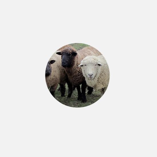 3 Sheep at Wachusett Mini Button