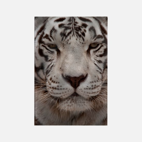 (10p) White Tiger 4 Rectangle Magnet