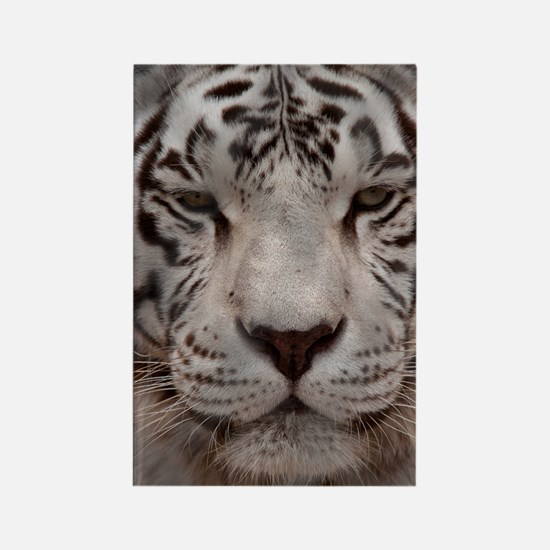 (12p) White Tiger 4 Rectangle Magnet