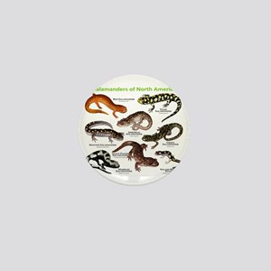 Salamanders of North America Mini Button