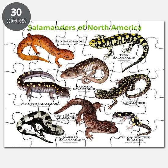 Salamanders of North America Puzzle