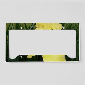 Yellow Bearded Iris Flower License Plate Holder