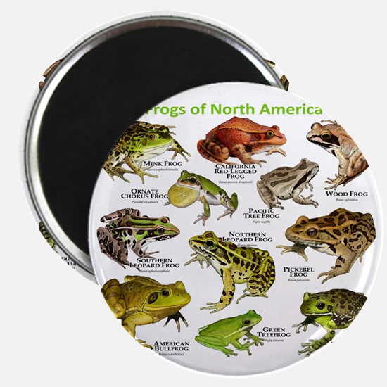 Frogs of North America Magnet