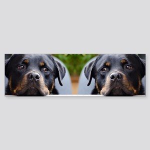 Rottweiler dog Sticker (Bumper)