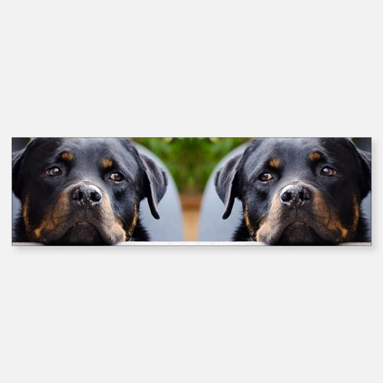 Rottweiler dog Sticker (Bumper)