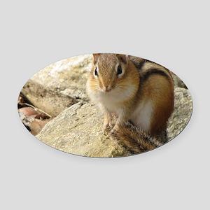 Chipmunk Oval Car Magnet