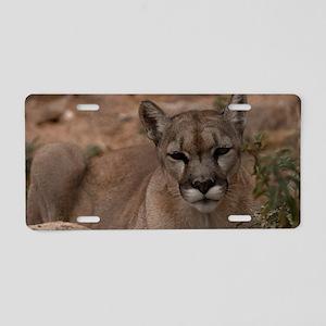 (6) Mountain Lion 1 Aluminum License Plate