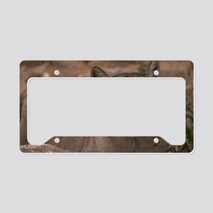 (6) Mountain Lion 1 License Plate Holder