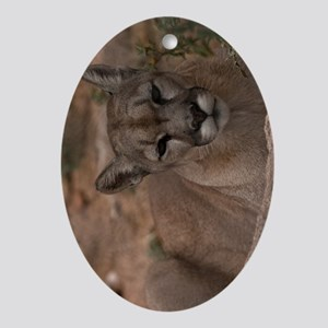 (9) Mountain Lion 1 Oval Ornament