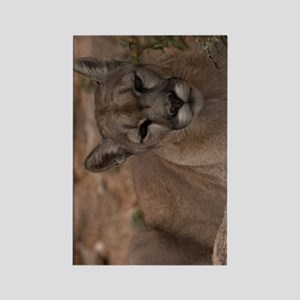 (11p) Mountain Lion 1 Rectangle Magnet