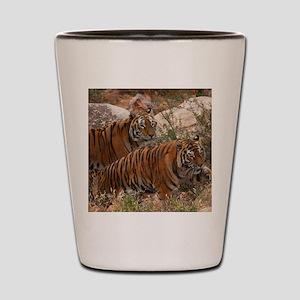 (4) Tigers Two Walking Shot Glass