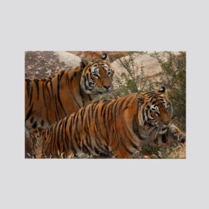 (4) Tigers Two Walking Rectangle Magnet