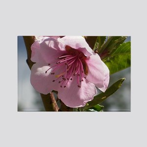 flower-horz-24 Rectangle Magnet