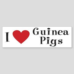 Guinea Pig Bumper Sticker: I love Guinea Pigs