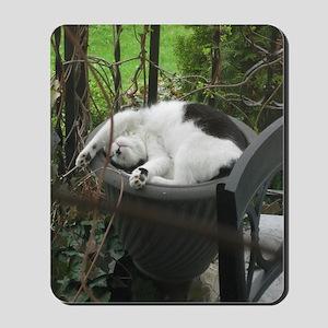 Cat sleeping in a flowerpot Mousepad