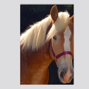 Sunlit Horse Postcards (Package of 8)