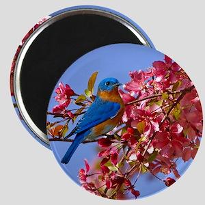 Bluebird in Blossoms Magnet