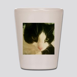 CAT 341 Shot Glass
