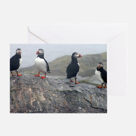 puffins on rock Greeting Card