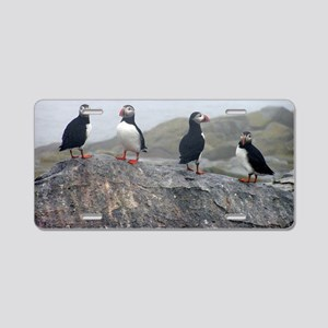puffins on rock Aluminum License Plate