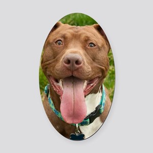 Pit Bull 13 Oval Car Magnet