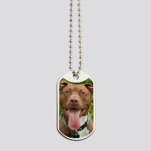Pit Bull 13 Dog Tags