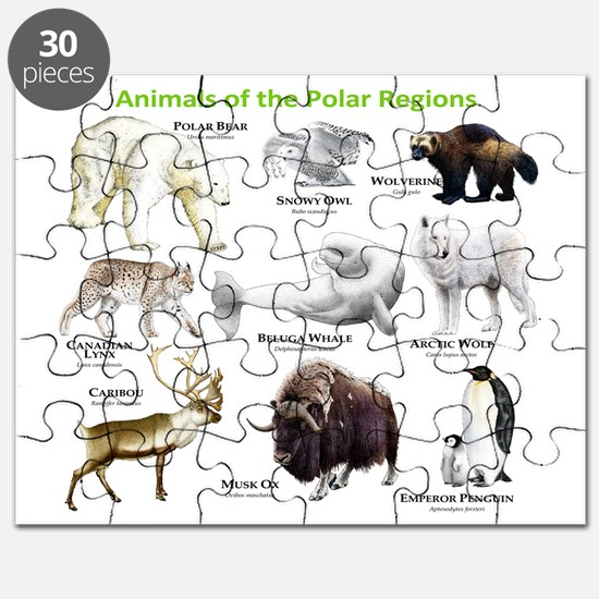 Animals of the Polar Regions Puzzle