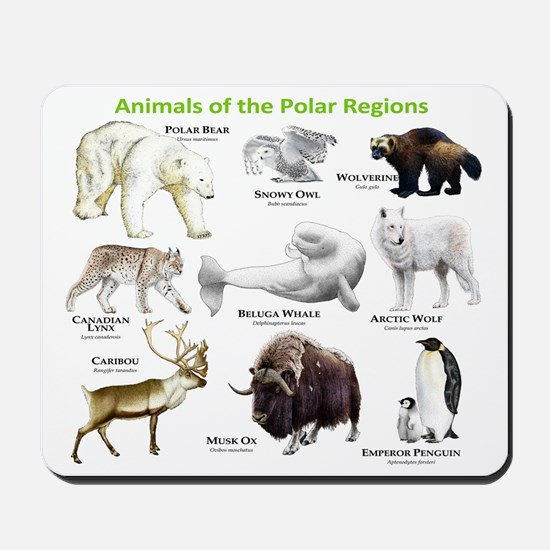 Animals of the Polar Regions Mousepad