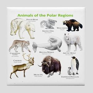 Animals of the Polar Regions Tile Coaster