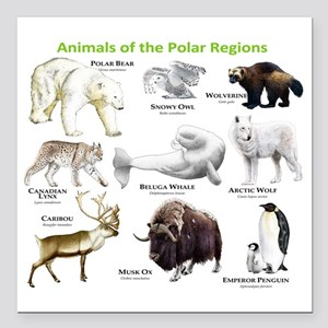 "Animals of the Polar Reg Square Car Magnet 3"" x 3"""