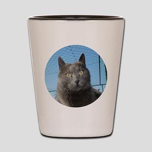 sivi5 Shot Glass