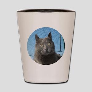 sivi6 Shot Glass