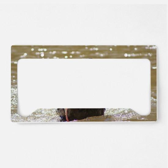 IMG_0391 License Plate Holder