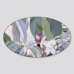 Humming bird Sticker (Oval)