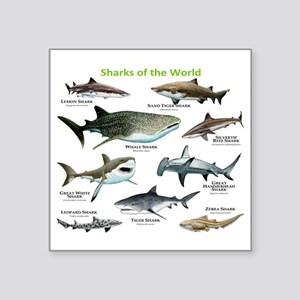 "Sharks of the World Square Sticker 3"" x 3"""
