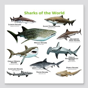 "Sharks of the World Square Car Magnet 3"" x 3"""