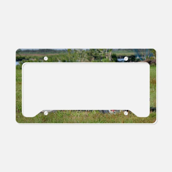 Red Belly Ford License Plate Holder
