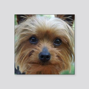 "YorkieShowerC Square Sticker 3"" x 3"""