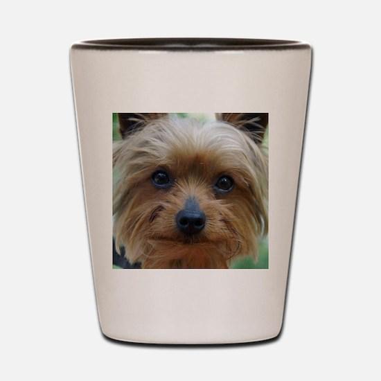 YorkieShowerC Shot Glass