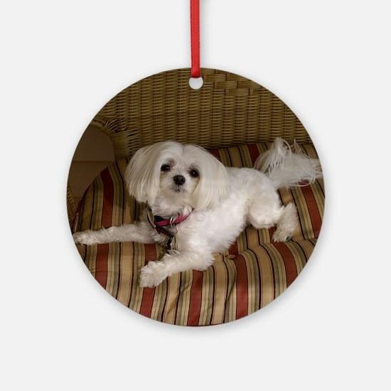 MalteseShower1 Round Ornament