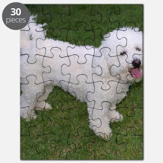 BichonFriseShower Puzzle