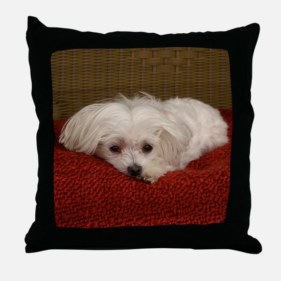 MalteseShower2 Throw Pillow