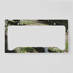 rectpeel38.5x24.5 License Plate Holder