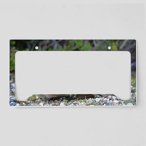 Echidna License Plate Holder