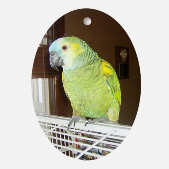 Amazon Parrot1100x1500 Oval Ornament