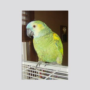 Amazon Parrot1100x1500 Rectangle Magnet
